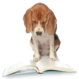Sex and Death in the American Novel | The Writing Asylum |Puppy Reading